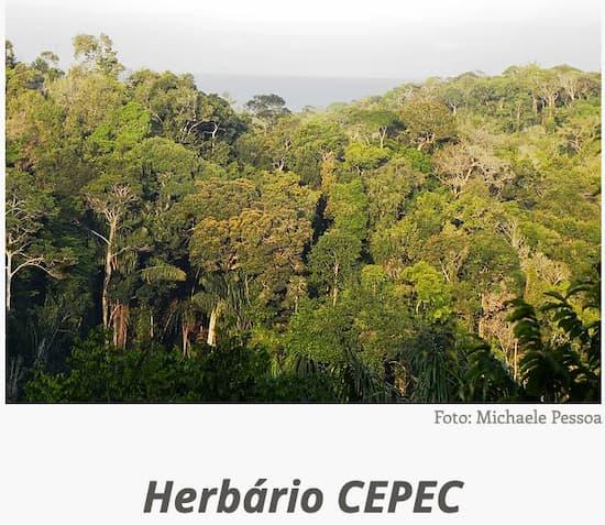 Herbario_CEPEC.jpg