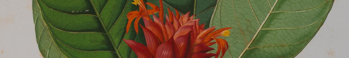 Herbario_botanica_MNRJ.jpg
