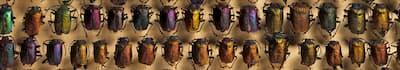 entomoMNRJ.jpg